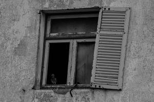 07 paloma-en-ventana FS